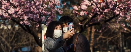 A couple enjoying the cherry blossoms with masks on